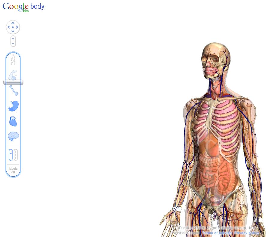 Estudia Anatomía con Google   Ubuntu y más cosas